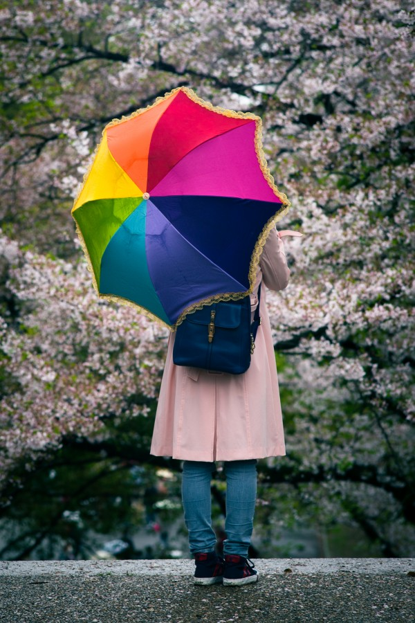 Umbrella Cherry Blossoms